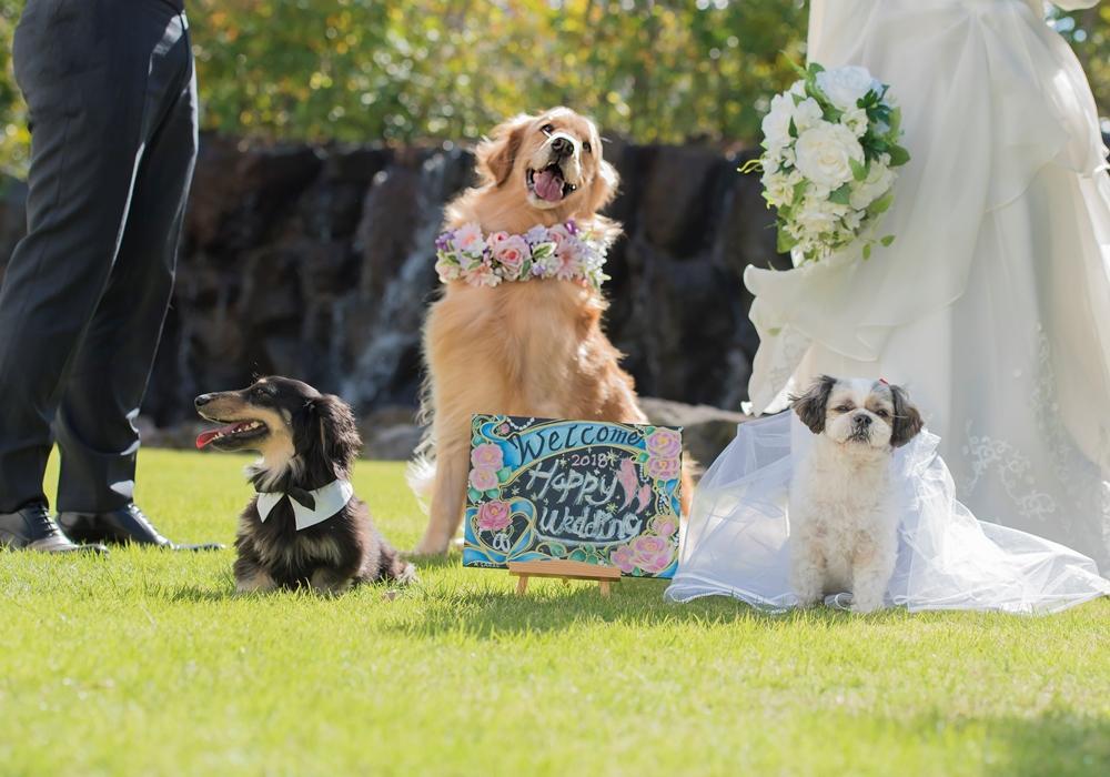 【愛犬と一緒のウエディング】 大切な家族の愛犬と一緒に結婚式をしたい!そんなカップルの夢が叶えられるようになりました。完全貸切のゲストハウスだからこそ叶う自由で心温まるウェディングをお手伝いいたします。
